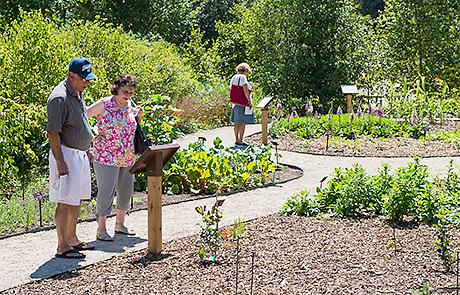 Visitors Tour The Medicinal Garden At The Matthaei Botanical Gardens.  (Photo By Austin Thomason, Michigan Photography)