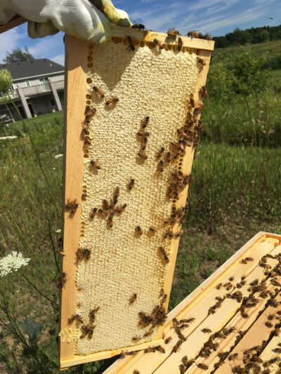 Jennette Green shows off one of the frames in her hive of honeybees. (Photo courtesy of Jennette Green)