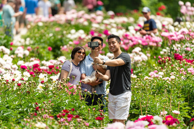 Photo of people taking selfies at the peony garden