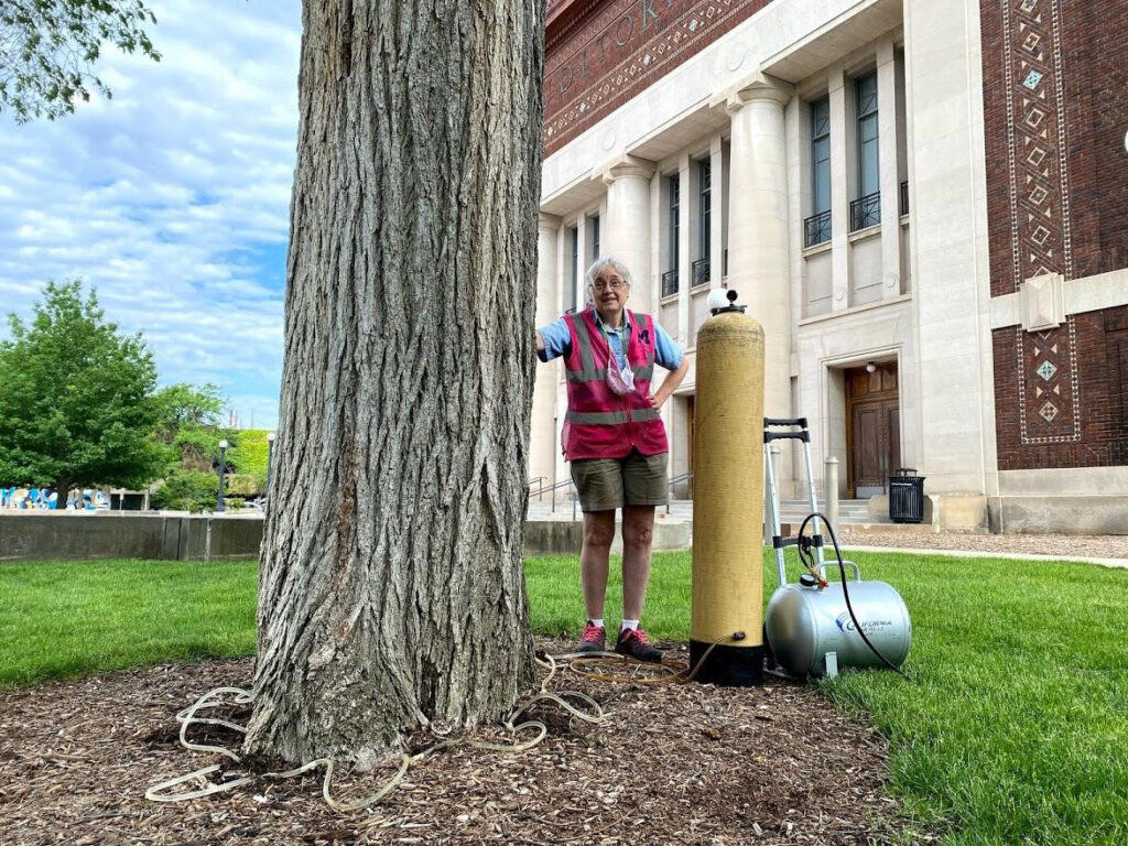 To stave off Dutch elm disease, Forestry Specialist Jane Immonen administers fungicide to a large elm tree near Hill Auditorium. (Rob Doletzky, Grounds Services)