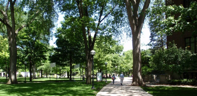 Across U-M's campus, mature, majestic canopies of trees help shape the campus experience, like these near the Diag on Central Campus. (Courtesy of Campus Planning)