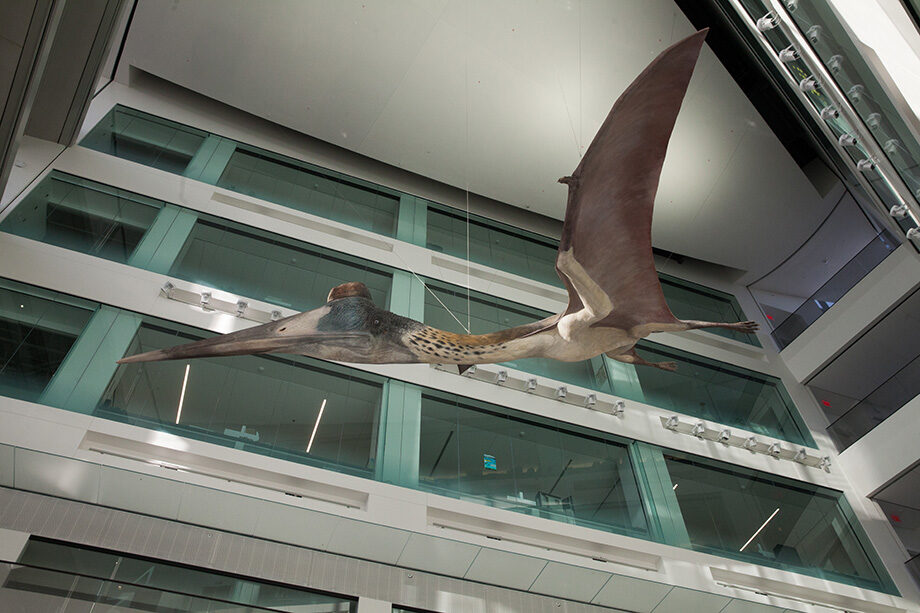 Photo of the Quetzalcoatlus pterosaur in the Museum of Natural History atrium