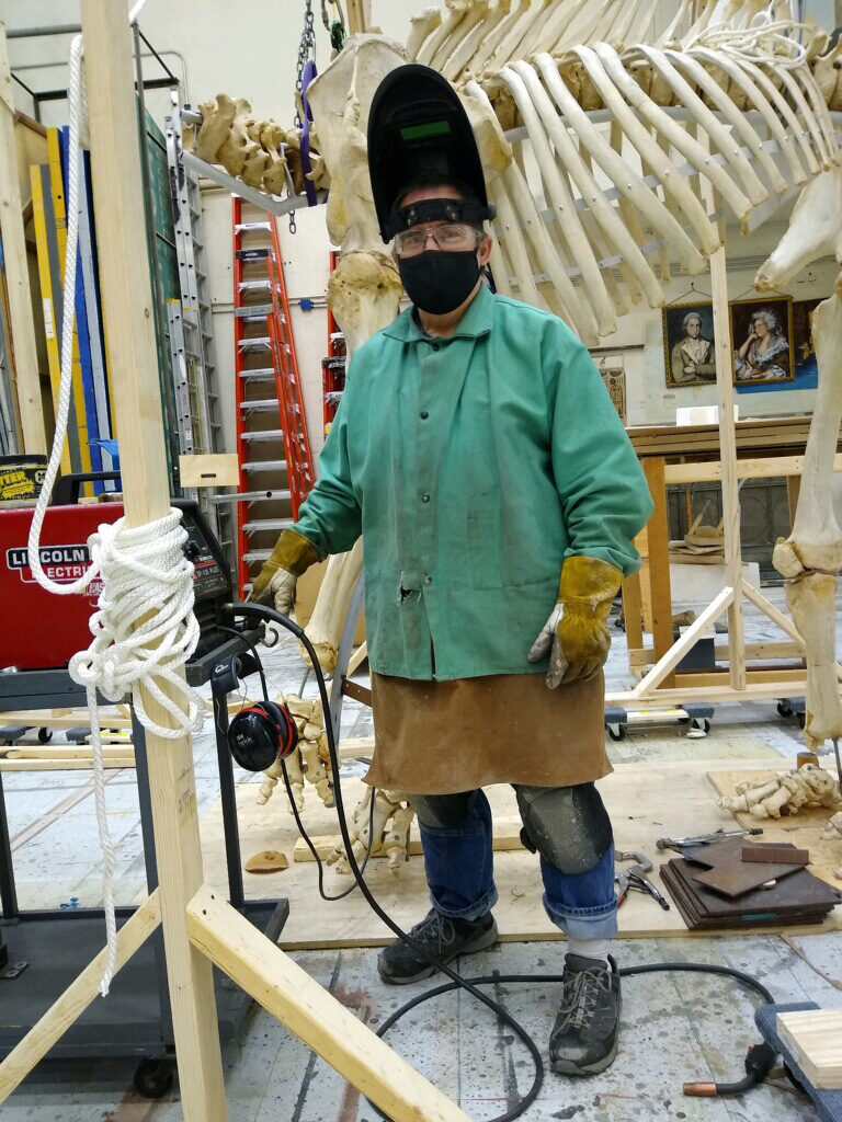 Dan Erickson properties carpenter/artisan in the School of Music, Theatre & Dance, works on remounting the skeleton of Iki, an Asian elephant whose bones were obtained by Wayne State University 40 years ago. (Photo courtesy of Dan Erickson)